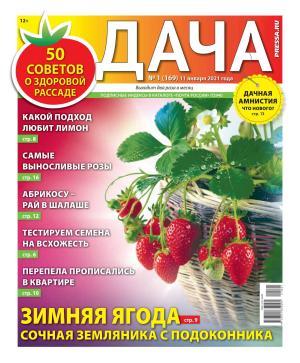 Дача Pressa.ru 01-2021