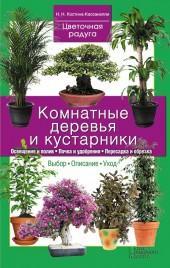 Комнатные деревья и кустарники фото №1